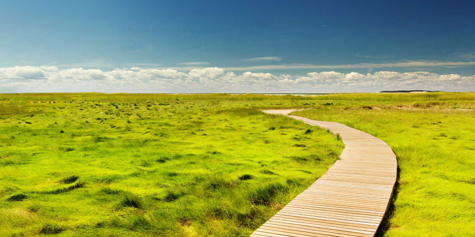A wooden path cuts through sea grass
