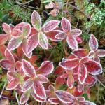 Herfstkleuren, Noorwegen, Fru Amundsen