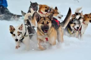 Hondeslee Noord-Noorwegen