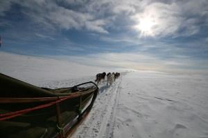 Sledehonden, Finnmark, Noorwegen, Fru Amundsen