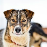 Hondenslede Tromsø Noorwegen