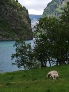 langs de Nærøyfjord