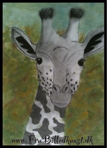 FruBilledkunst - giraf - 14 årig