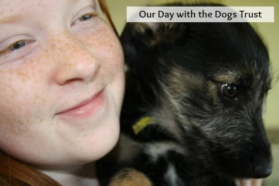 our day with the dogs trust