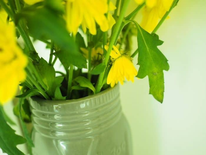 yellow chysanthemum