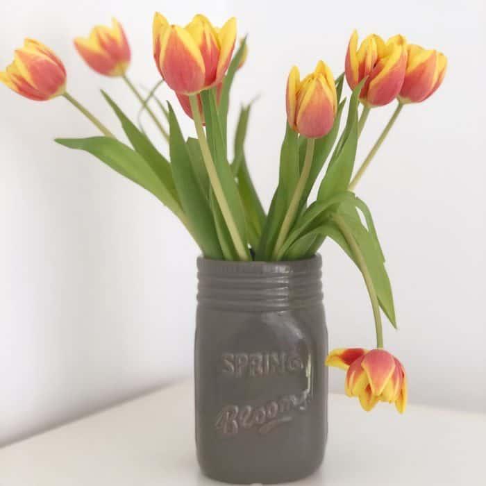 Gorgeous Tulips
