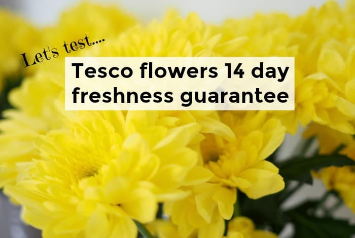 Let's Test: Tesco flowers 14 day freshness guarantee.... | The Diary on groupon flowers, wal mart flowers, amazon flowers, aldi flowers, sainsbury flowers, big lots flowers, retail flowers, virgin flowers, sharp flowers, iceland flowers, peapod flowers, ups flowers, whole foods market flowers, white wood flowers, claire's flowers, lowe's flowers, walgreens flowers, menards flowers, asda flowers, trader joe's flowers,