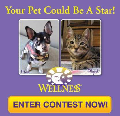wellness-pet-contest
