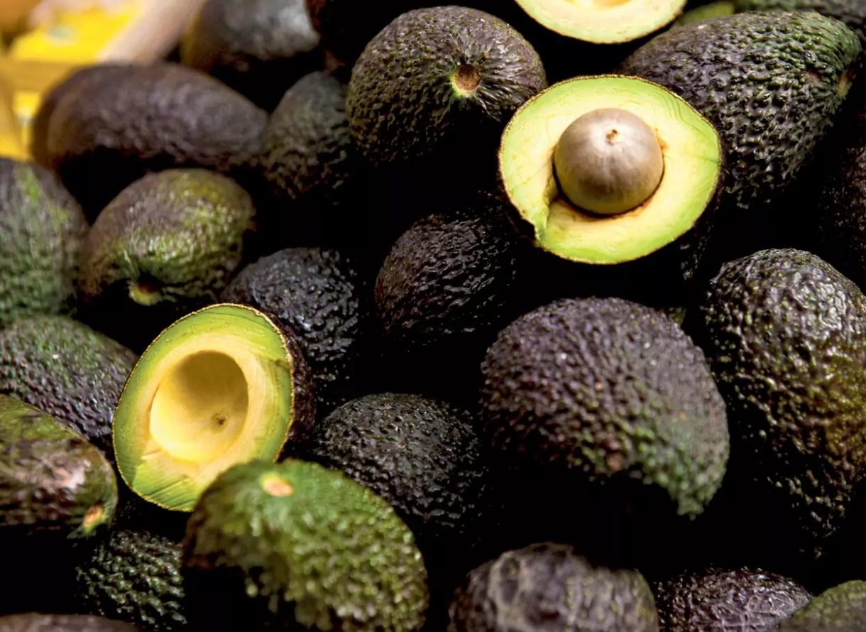 avocado-hass-agricola-persea