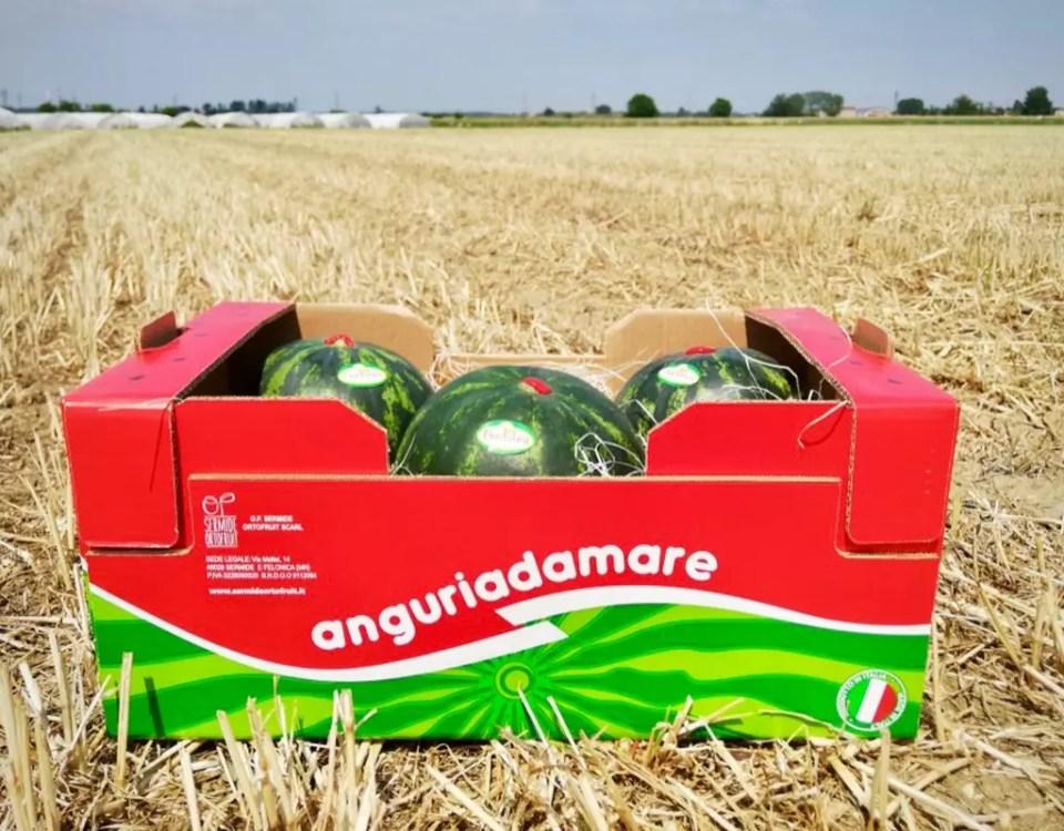 Anguria-Anguriadamare-Nadalini-OP-Sermide-Ortofruit-midi