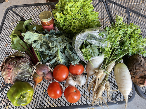 Tomatoes, lettuce, spinahc, radishes, raddichio, beets, sweet peppers, parsley root, and salsa from the CSA farmers on December 5.