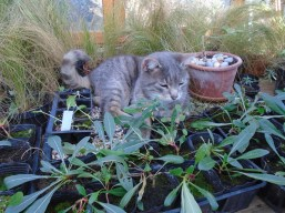 1artur in plants