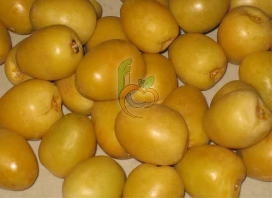 Fresh Barhi Dates by Fruit Link