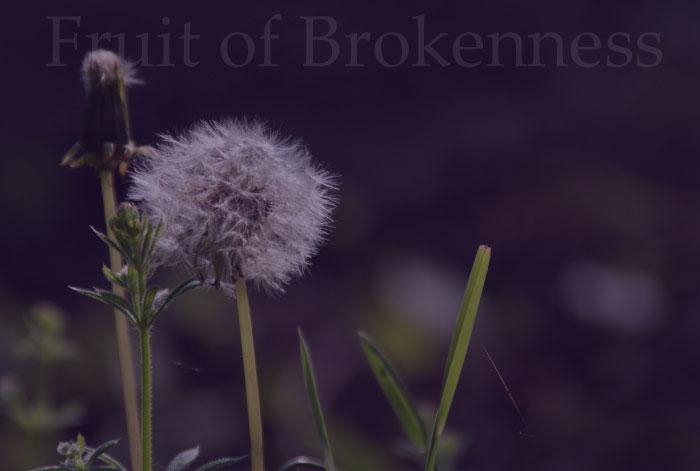 an ordinary dandelion