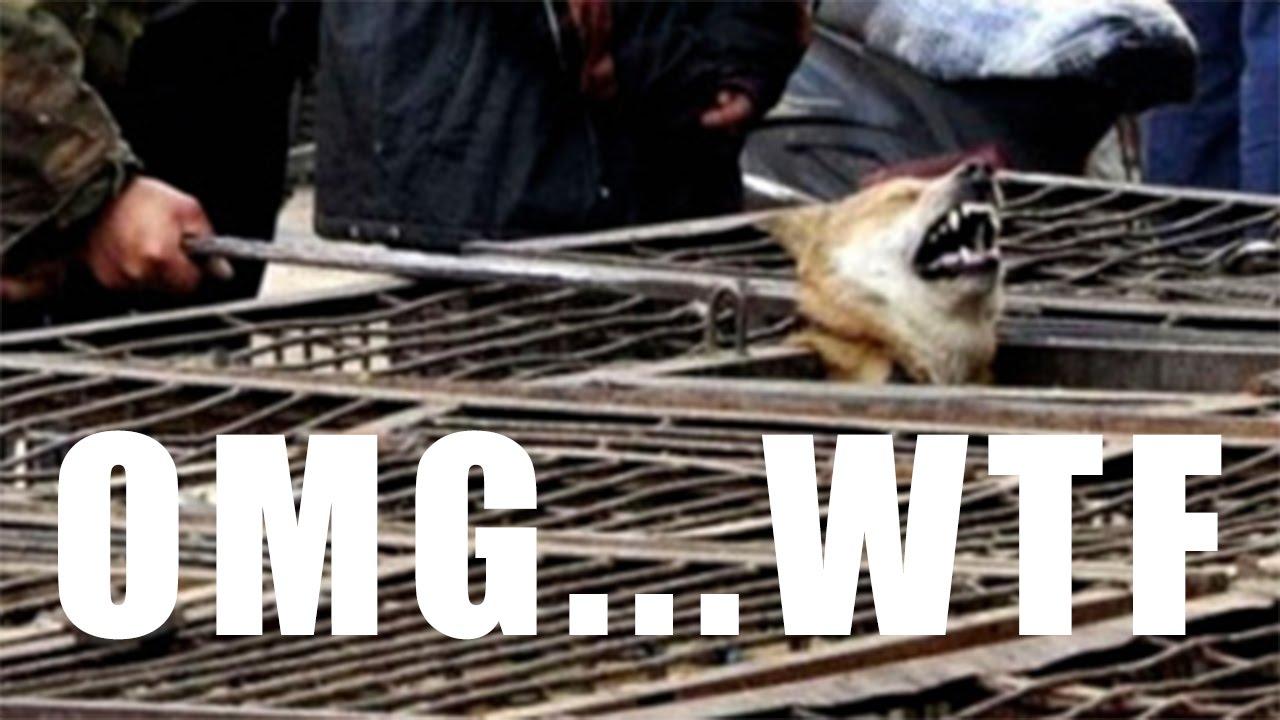 Dog being slaughtered