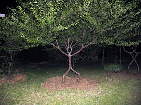 A person tree