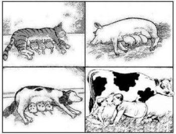 latte-e-specie-animali