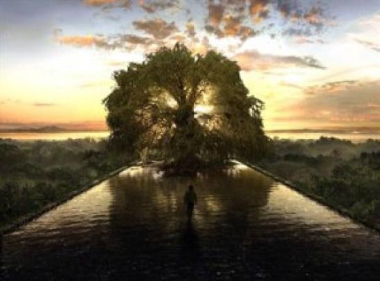 albero e acqua