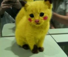 pikachu-cat-412x550 thumb