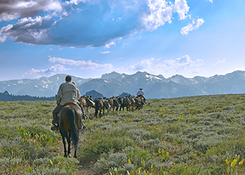 A pack train of three horses and six mules is lead toward into the mountains.