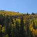 Fall Colors: Logo 2
