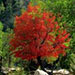 Fall Colors: Logo 3