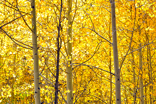 Image result for yellow october leaves