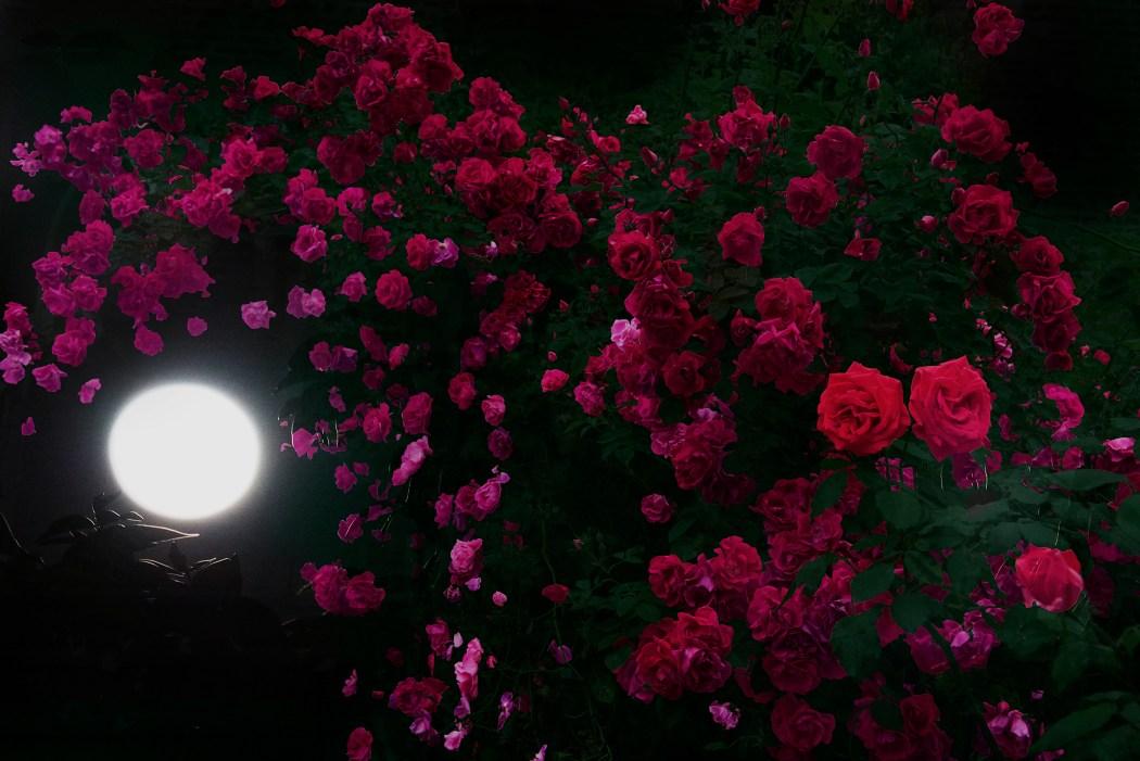 "HIROMI ASAI, presents new Spring/Summer 2018 men's collection ""Midsummer Night's Roses"""