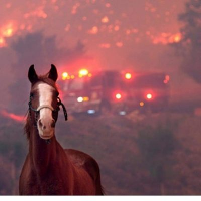 California Fires are they lessons from nature?