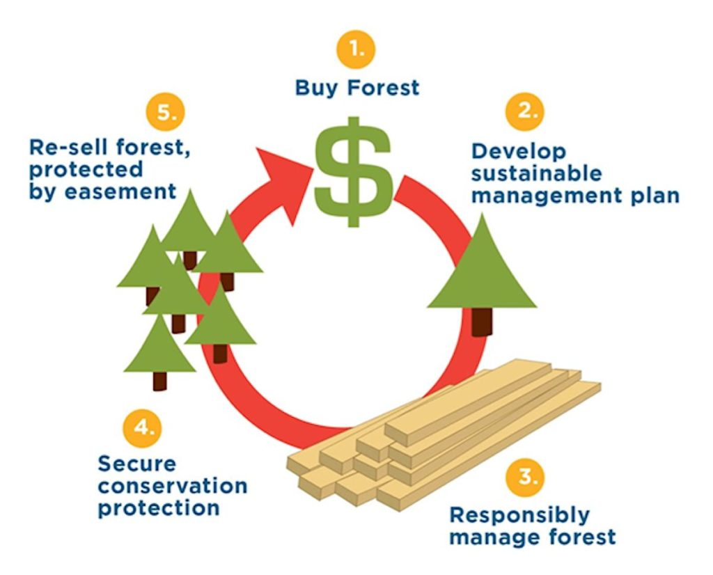 Working Forests Kept Working The Working Forest Fund