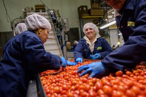 tomatoes and workers