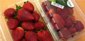 fresh strawberries in container