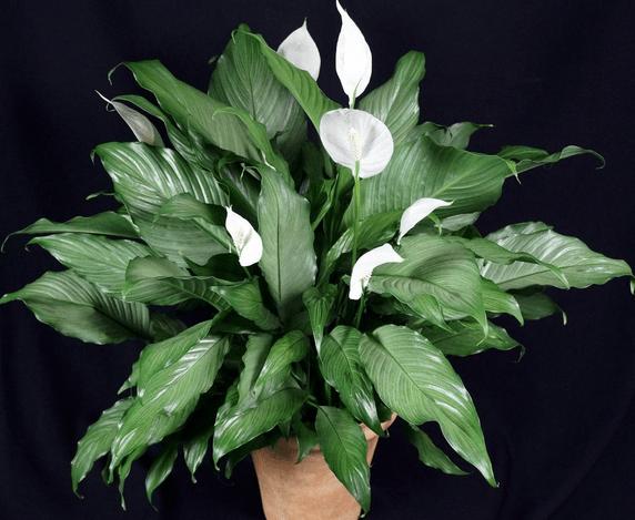 Feng Shui Plants In Bedroom
