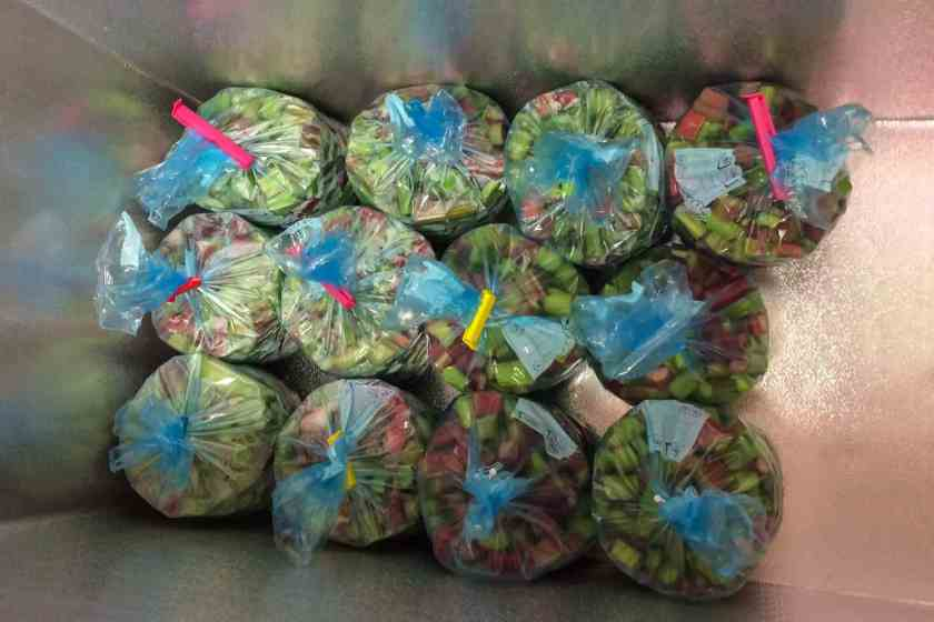 Resultatet av årets första skördedag blev 30 kg rabarber. Det är en lagom mängd för en person att dra, hacka, packa och frysa.