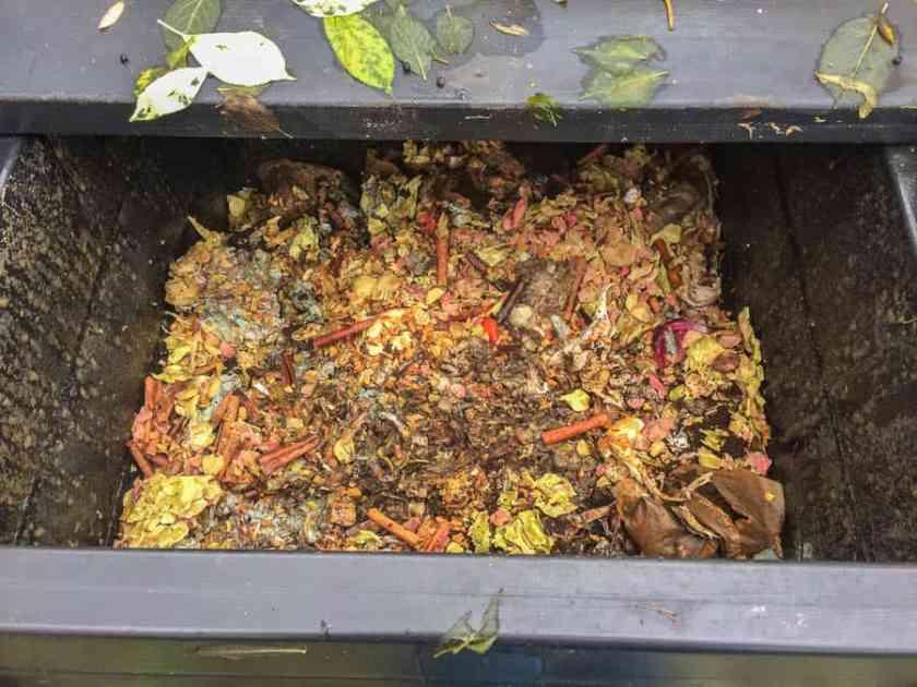 Komposten är för tillfället halvfull – mest rabarberskrufs men det är kryddorna som skapar den goda atmosfären.