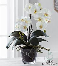 Jane Seymour Silk Botanicals White Phalaenopsis Orchid Plant