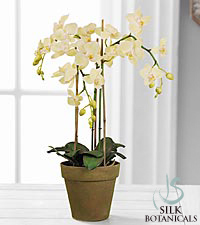 Jane Seymour Silk Botanicals Light Green Phalaenopsis Orchid Plant