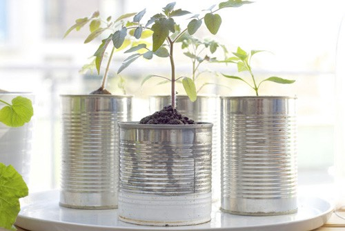 tin_can_planters_main