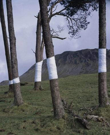 zander-olsen_tree-line_002