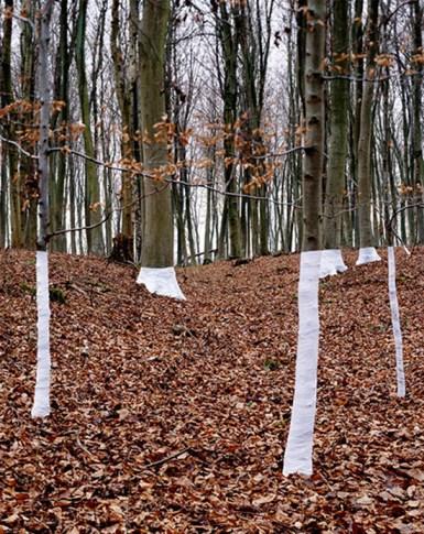 zander-olsen_tree-line_005