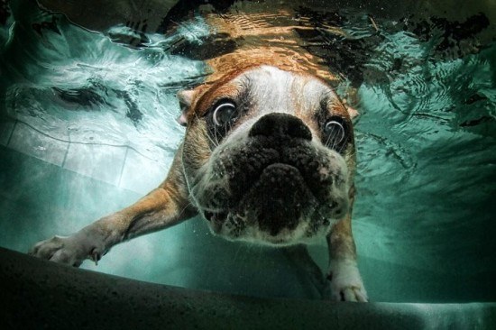 diving-dogs-photography7