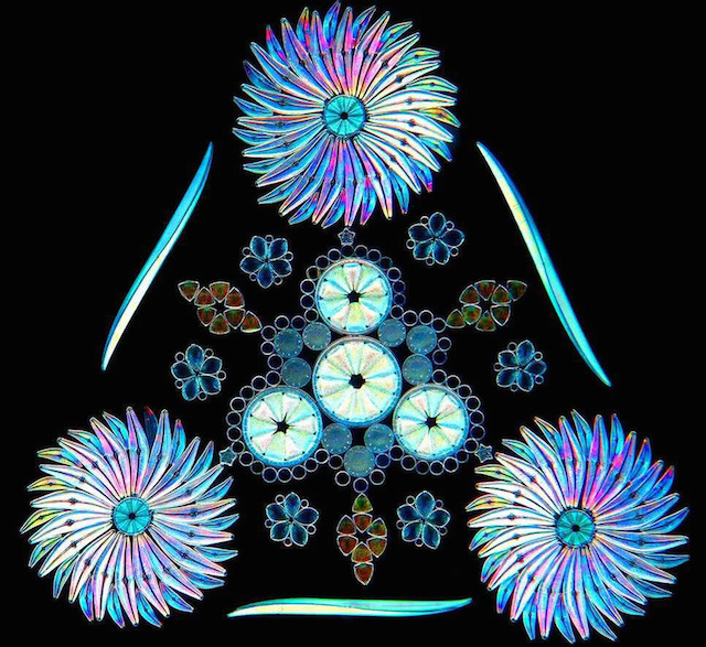 Diatom Patterns by Klaus Kemp