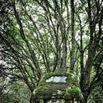 Car Graveyards Photography-5