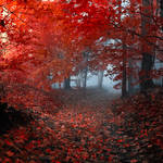 enchantingautumnforest5