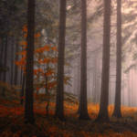 enchantingautumnforest7