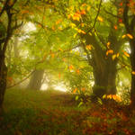 enchantingautumnforest8