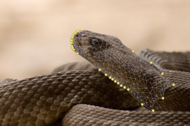Eingerollte Schlange mit angehobenem Kopf.