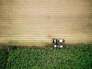 Sugarcane   The main feedstock for biofuel in Brazil