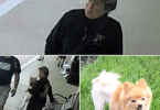 ID #18-493 Woman Allegedly Steals Service Dog