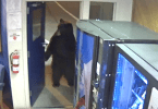 Bear Walks into California Highway Patrol Office